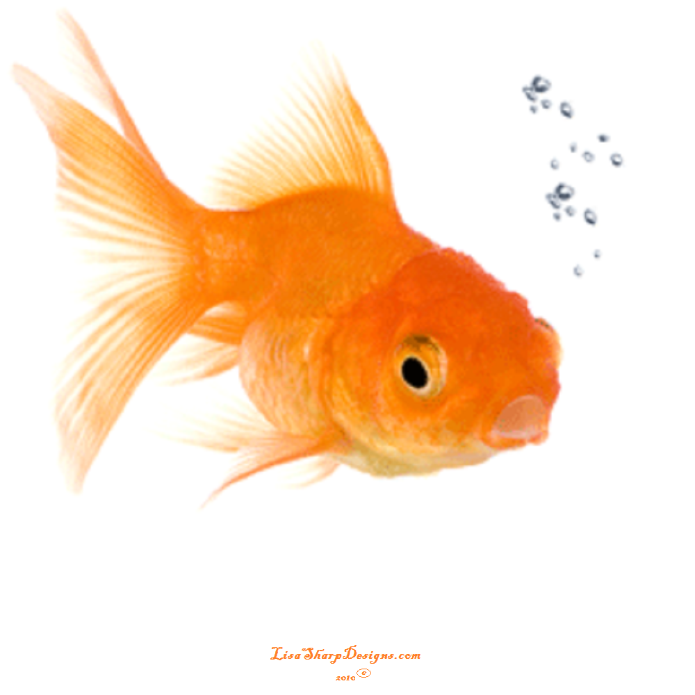 Lisa sharp designs just another site for Big gold fish